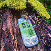 Geocache in the ravine
